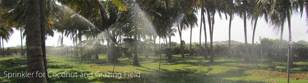 Sprinklers For Coconut And Grazing Field Perumalmalai